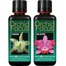 ORCHID FOCUS Crecimiento